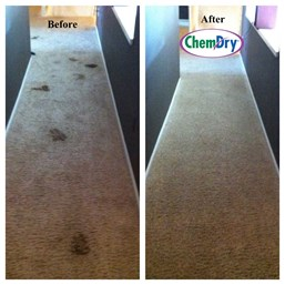 Carpet Cleaning Indianapolis, IN